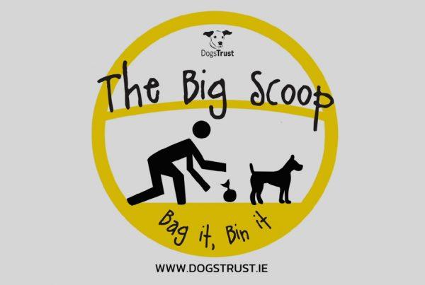 DOGS TRUST IRELAND